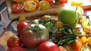 آن سوی گوجهها! - اخبار زیست فناوری