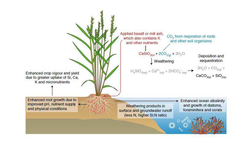 یک استراتژی جدید به منظور کاهش CO2 جو و بهبود امنیت غذایی - اخبار زیست فناوری