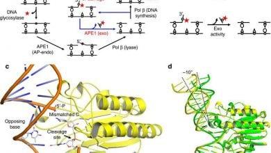Photo of رمزگشایی از فرایند بازسازی DNA