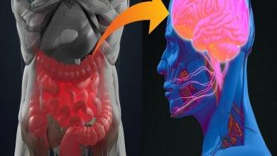Photo of ارتباط محور میکروبیوم رودهای-مغزی و سلامت روان