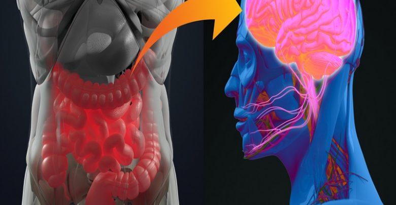 ارتباط محور میکروبیوم رودهای_مغزی و سلامت روان-زیست فن