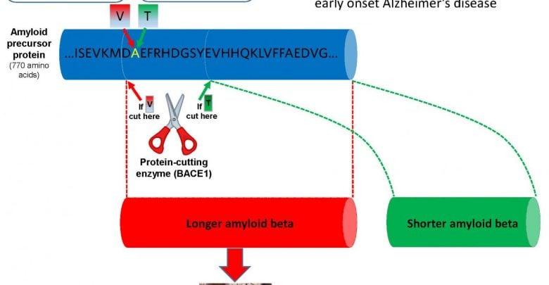 هدایت قیچی آنزیمی، پتانسیلی برای توقف بیماری آلزایمر! - اخبار زیست فناوری