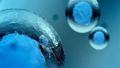 سلولها چگونه از خود در مقابل استرس مکانیکی محافظت میکنند؟-زیست فن