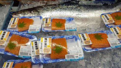 Photo of روش جدید پی بردن به منابع پروتئین ماهی سالمون پرورشی و وحشی