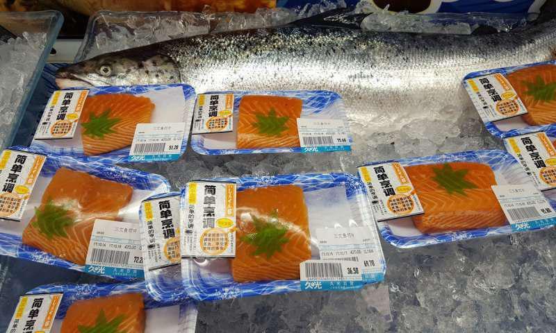 روش جدید پی بردن به منابع پروتئین ماهی سالمون پرورشی و وحشی