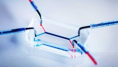 Photo of Effective drug transfer tests look promising for placenta-on-a-chip technology