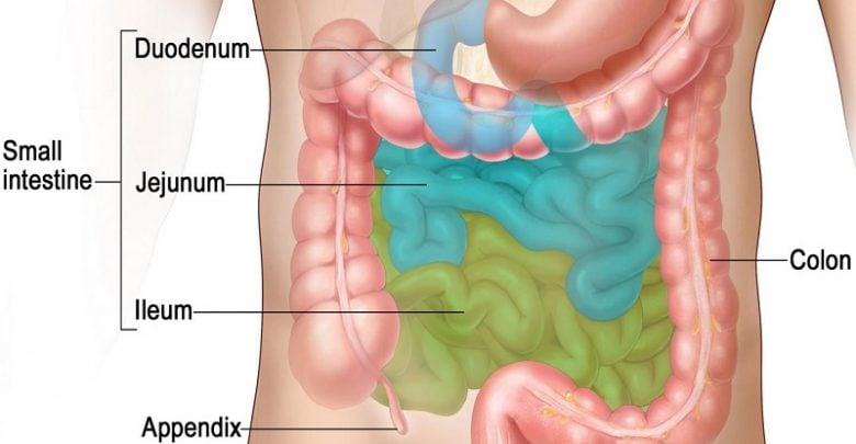 ضرورت وجود باکتریها در روده برای جذب چربی-زیست فن