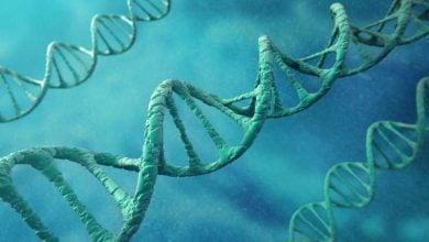 ساخت همانندسازی DNA در یک مدل سلول مصنوعی – اخبار زیست فناوری