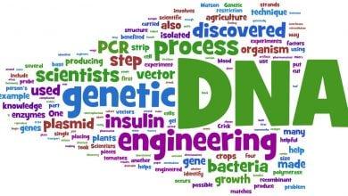 پیشرفت مهندسی ژنوم در باکتری ها - اخبار زیست فناوری
