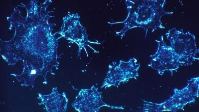 An under-the-radar immune cell shows potential in fight against cancer