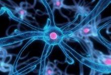 Photo of کمک به ترمیم مغز با استفاده از سلولهای بنیادی خفته
