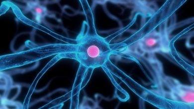 کمک به ترمیم مغز با استفاده از سلولهای بنیادی خفته-زیست فن