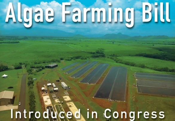 Algae Agriculture Act introduced in Congress - اخبار زیست فن