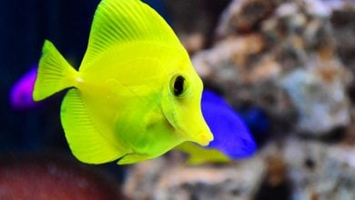 Baby fish led astray by high CO2 in oceans - اخبار زیست فن