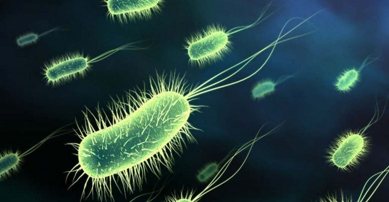 Bacteria activate their own killer