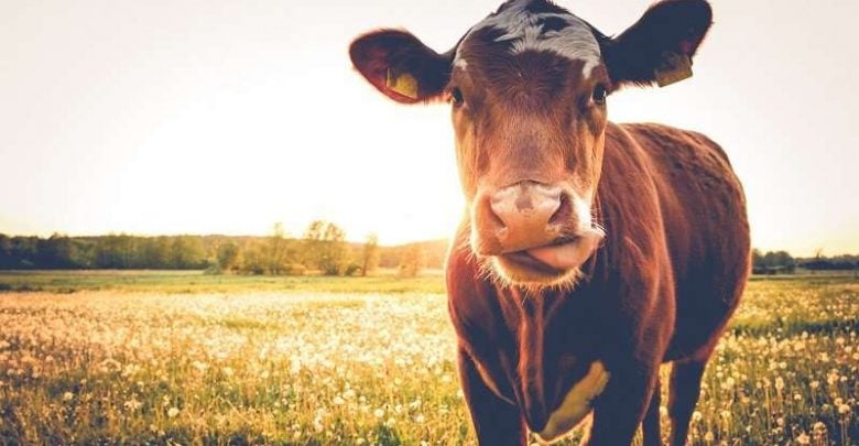 Dairy farms are using too much water - اخبار زیست فن