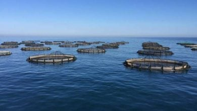 Europe must sea food in a new way thanks to warming waters - اخبار زیست فن