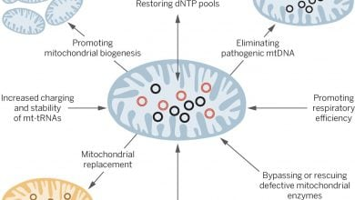 Mitochondrial mutations and disease