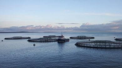 Photo of Gael Force Group to showcase new products at Aquaculture UK