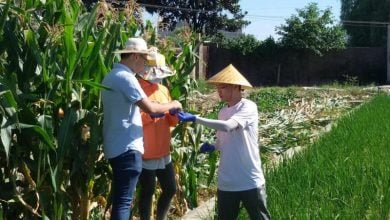 Gene Boosts Rice Growth and Yield in Salty Soil - اخبار زیست فن