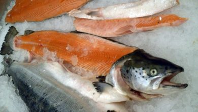 Photo of Genetically engineered AquaBounty salmon ready for US market, but caught in Congressional 'sausage grinder'