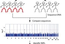 GWAS identifies genetic alteration associated