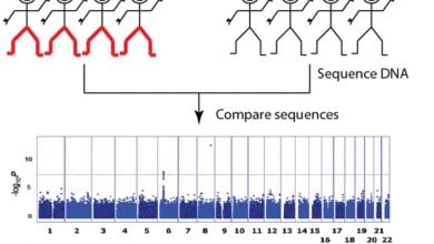 Photo of GWAS identifies genetic alteration associated with opioid dependence