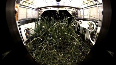 Photo of زیستگاه پیشرفته برای گیاهان