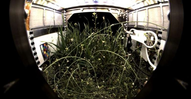 Giving roots and shoots their space The Advanced Plant Habitat - اخبار زیست فن