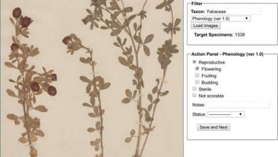 Photo of Green digitization: Botanical collections data answer real-world questions