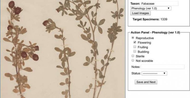 Green digitization Botanical collections data answer real-world questions - اخبار زیست فن