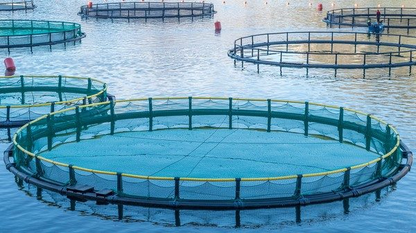 Industrial opportunities for aquaculture students - اخبار زیست فن