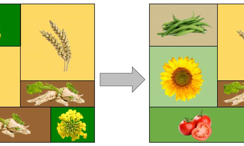 Natural aphid predators reduce pesticide use - اخبار زیست فن
