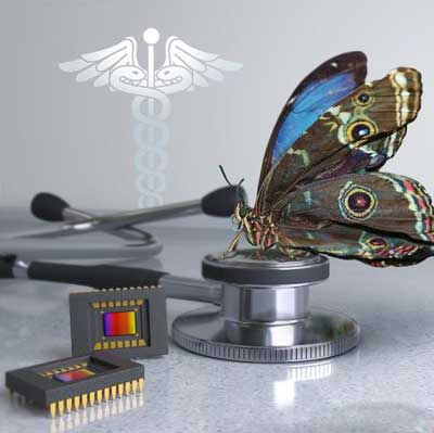 چشمهای پروانه الهام بخش دوربینی جدید شدند_اخبار زیست فناوری