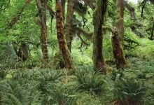 Plants play greater role than megaherbivore extinctions in changes to ecosystem structure - اخبار زیست فن