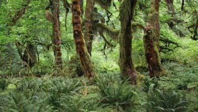 Photo of گیاهان نقش مهم تری در تغییرات ساختار اکوسیستم نسبت به انقراض گیاهخواران بزرگ بازی می کنند