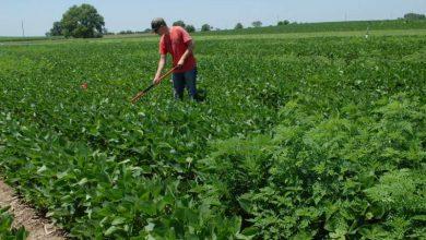 Photo of راگوا تهدیدی برای تولید سویا