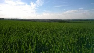 Photo of بهبود عملکرد برنج