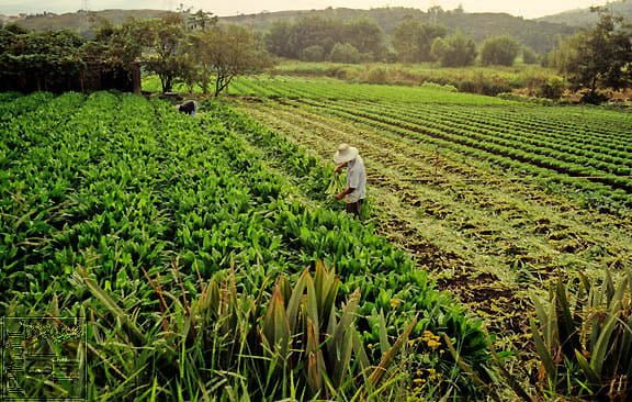STUDY ON PERCEPTIONS OF BRAZILIAN FARMERS REGARDING GM CROPS - اخبار زیست فن