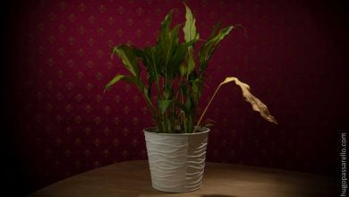 Photo of مکانیزم های پیری گیاه