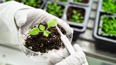 WILL GENE EDITING BE SUITABLE FOR AGRICULTURE - اخبار زیست فن