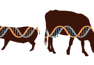 Why FDA's proposed gene-editing regulations could stifle CRISPR research on food animals - اخبار زیست فن