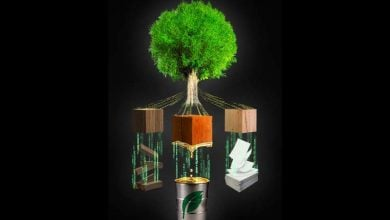 Photo of Wood formation model to fuel progress in bioenergy, paper, new applications