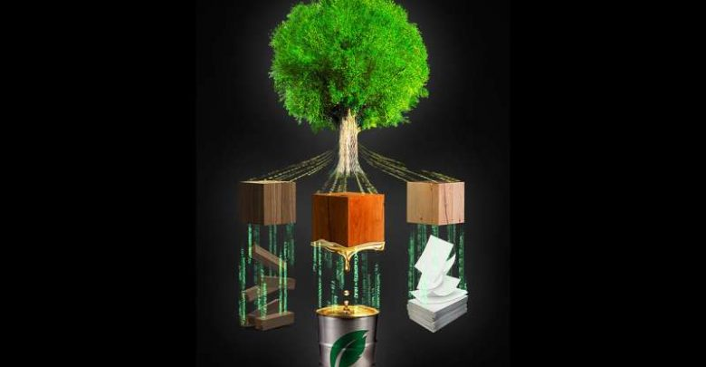 Wood formation model to fuel progress in bioenergy, paper, new applications - اخبار زیست فن