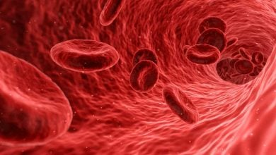 Photo of STEEL gene senses inadequate blood flow in microscopic blood vessels