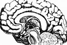 Photo of حافظهی ایمنولوژیکی در مغز