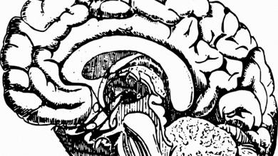 حافظهی ایمنولوژیکی در مغز-زیست فن