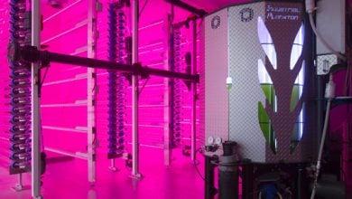 Photo of 42 فناوری برای حمایت از توسعه تولید تجاری روغنهای امگا-3 از جلبکها
