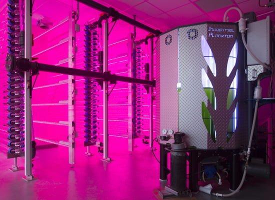 42 فناوری برای کمک به توسعه تولید تجاری روغنهای امگا3 از جلبکها – اخبار زیست فناوری