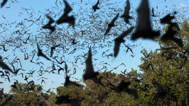 Photo of Bats spread Ebola because they've evolved not to fight viruses